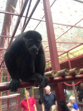 Foundation Jaguar Rescue Center: A monkey