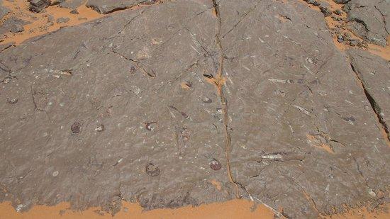 Viaje Por Marruecos - Private Day Tours: cantera de fósiles petrificados