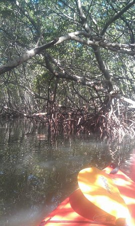 Almost Heaven Kayak Adventures: Mangrove tunnel