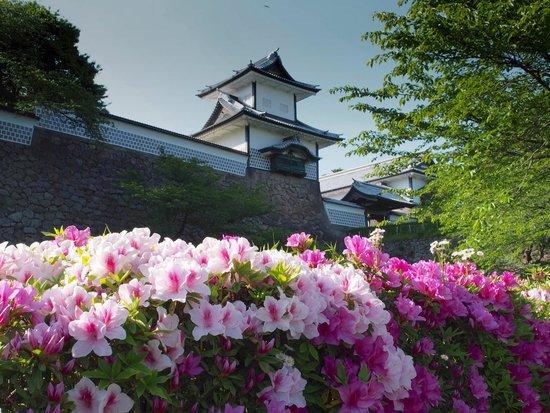 Japan Biking - Day Tours: Azaleas Everywhere
