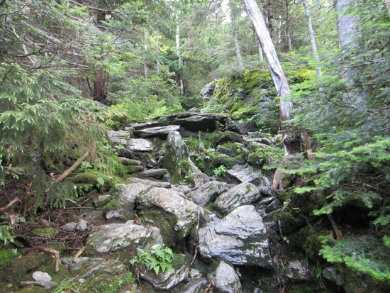 Mount Mansfield : laura cowles trail