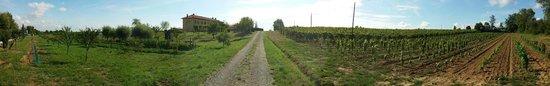 Carpeneto, Italia: Passeggiando tra le vigne