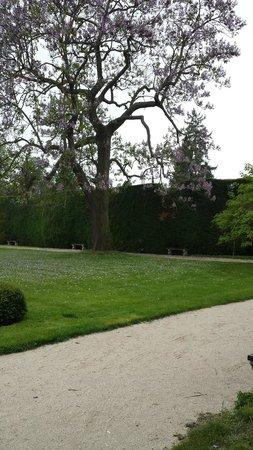 Zamek Lednice: Beautiful tree in the Lednice gardens