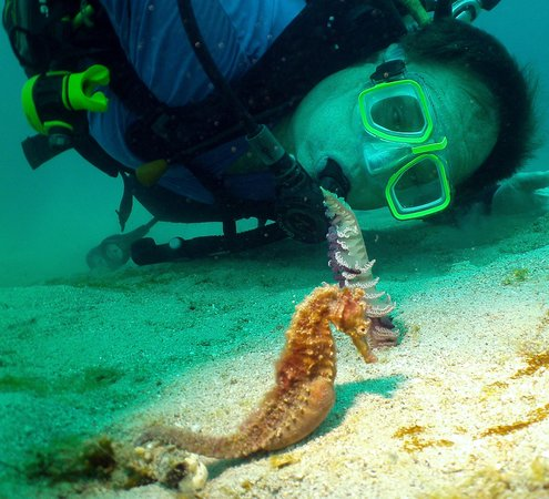 Blue Ribbon Dive Resort : See a Sea Horse