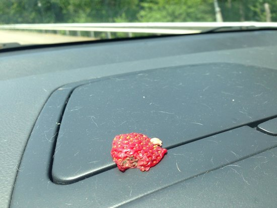 J.A.M.S.S.: Clearly visible Mold on fruit from fruit cup 7/13/14
