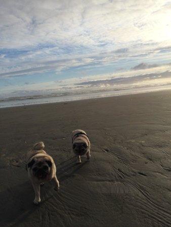 Ocean Crest Resort : Great beach for dogs.