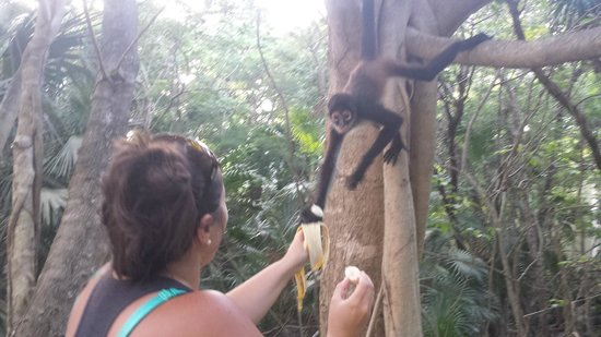 Sandos Caracol Eco Resort: Playing with a Monkey