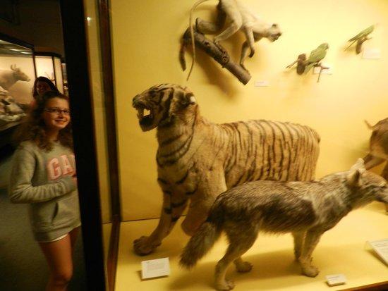 The Field Museum : Animais taxidermizados!