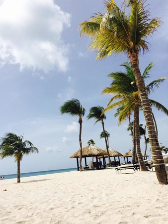 Bucuti & Tara Beach Resort Aruba : ��