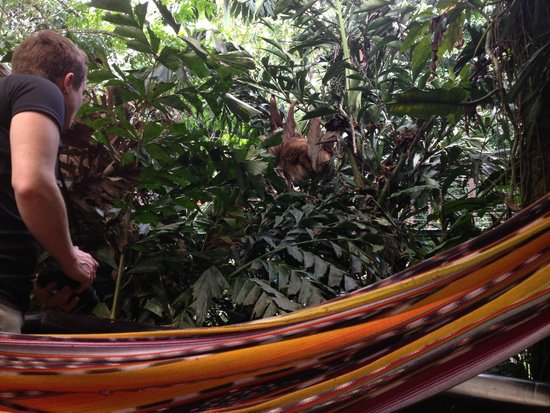 Nayara Resort Spa & Gardens : The sloth right outside our room