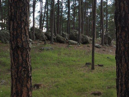 Big Pine Campground: Surrounding scenery.