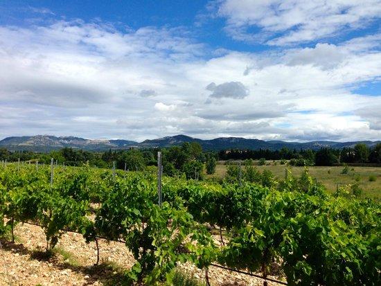 Domaine de Marotte: Vines and Monutains