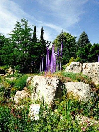 Denver Botanic Gardens: Periwinkle Reeds in a large rock garden