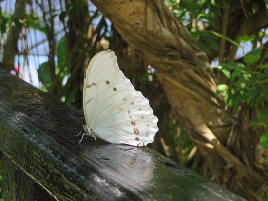The Butterfly Farm (La Ferme des Papillons): If you are patient - they land and you'll get a good snap!