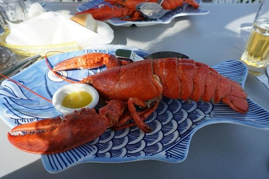 Shaw's Landing : SL Lobster