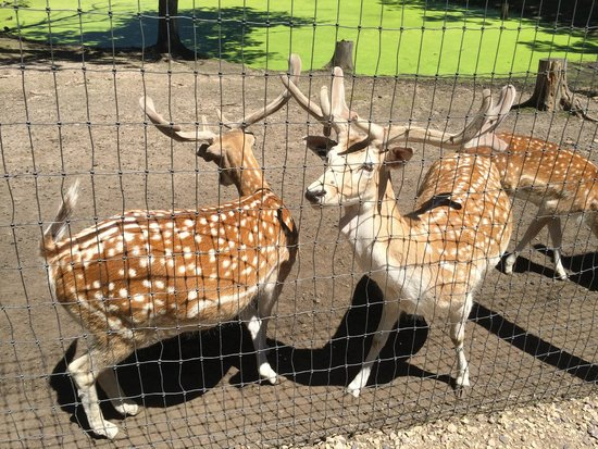 Wisconsin Deer Park: boys get put behind bars, while girls roam around the park
