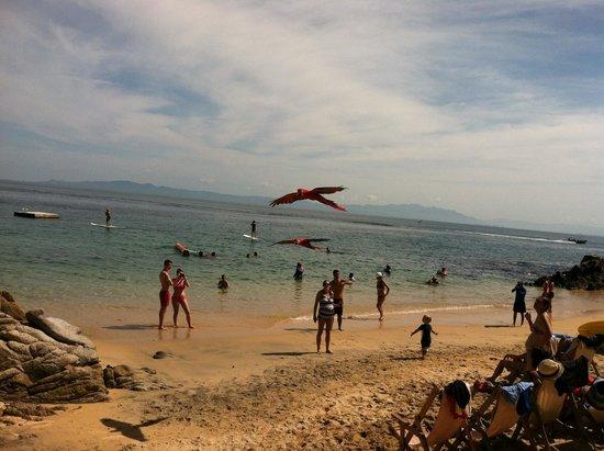 Vallarta Adventures - Las Caletas Beach Hideaway: Tropical birds flying above the beach area
