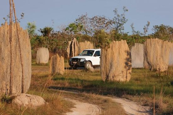 Termite Mounds, Kakadu National Park