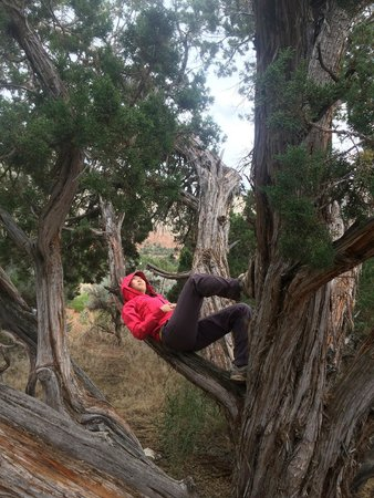 Kodachrome Basin State Park: Awesome Juniper tree at our campsite.