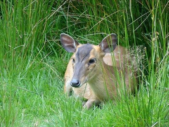 Exmoor Zoo: having a rest munkjak