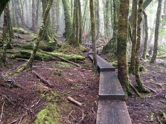 Peppers Cradle Mountain Lodge : King Billy walk guided by non-slip footpath.