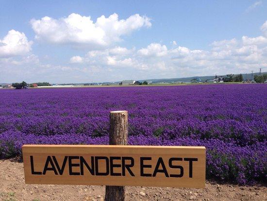 Hasil gambar untuk Farm Tomita – Lavender East