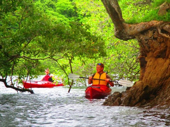 Bahia Rica Fishing and Kayak Lodge: Exploring mangroves