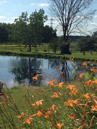 Ostrander's Bed & Breakfast: the view from our front door