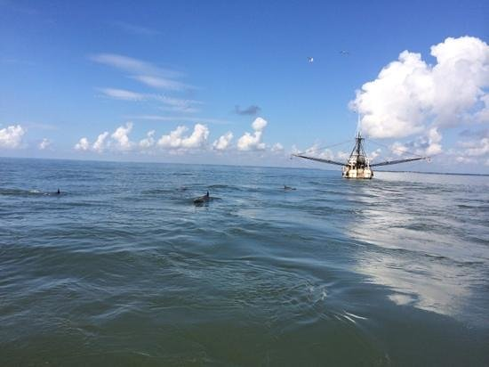 Morningstar Marina at Golden Isles - Boat Rentals : Daulphins following the shrimp boat.
