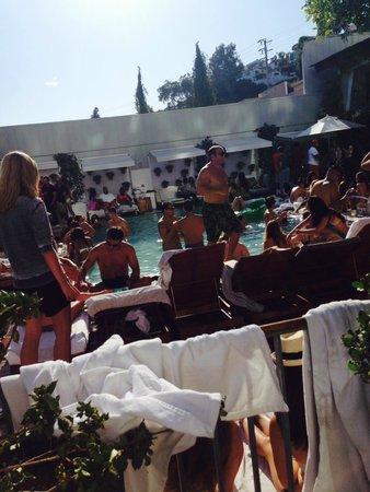Mondrian Los Angeles Hotel: 25 year spring break reunion. packed gross swimming pool