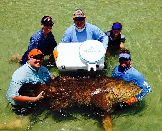Florida Inshore Xtream Charters: 350lb Goliath with Captain Jesse and the help of Deckgear cooler seat. Thanks Mark. I put a hurt