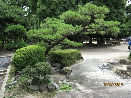 Nagoya Castle : Grounds around the garden