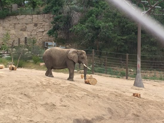 Cheyenne Mountain Zoo: Awesome elephant exhibit with a look inside their indoor center