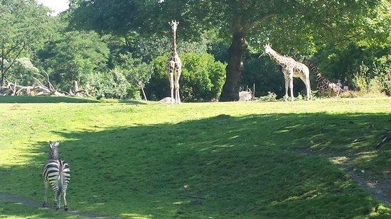 Woodland Park Zoo : Giraffe/Zebra