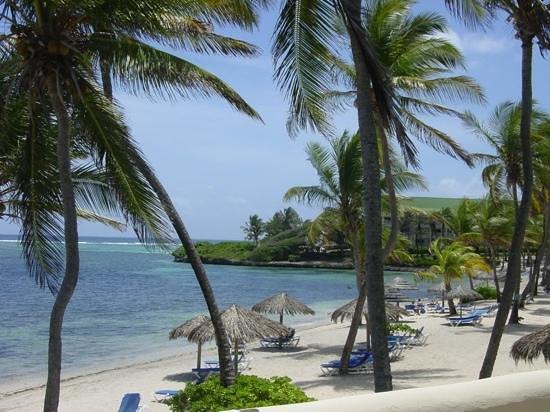 St. James's Club & Villas : Ocean side beach