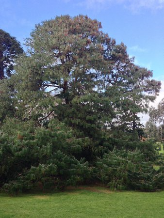 Royal Botanic Gardens Melbourne : Royal Botanic Gardens 10