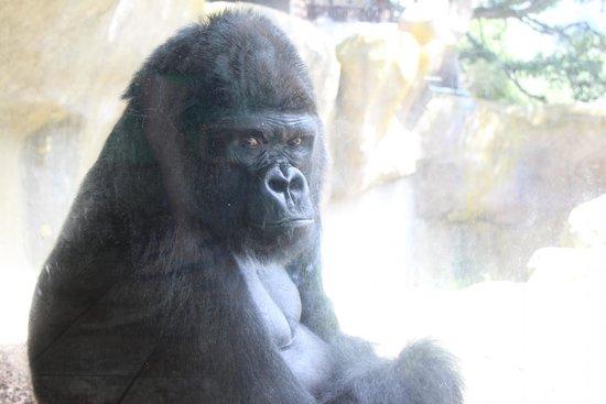 """Santa Barbara Zoo: """"Who you looking at?"""""""