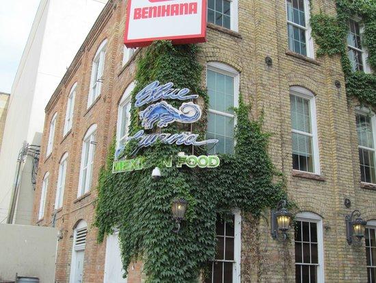 Blue Iguana: Sign at bldg corner