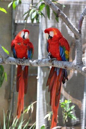 "Santa Barbara Zoo: ""Polly want a back rub?"""