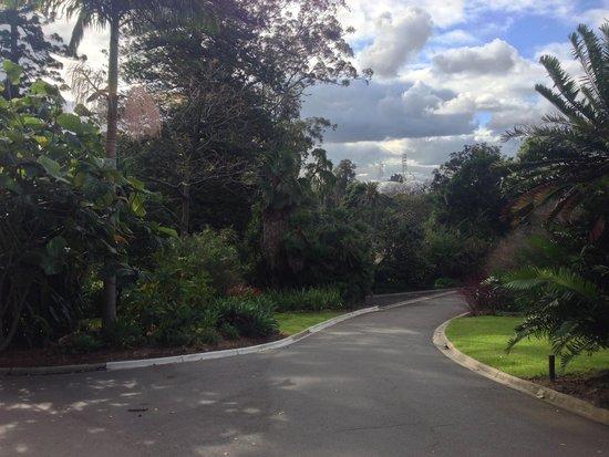 Royal Botanic Gardens Melbourne : Royal Botanic Gardens 11