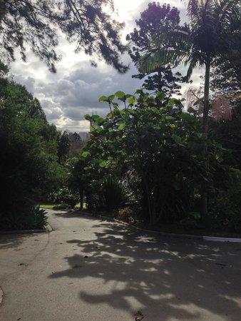 Royal Botanic Gardens Melbourne : Royal Botanic Gardens 14