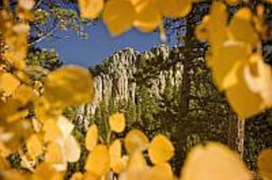 GeoFunTrek Tours: Autumn leaves in the Black Hills