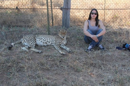 Tshukudu Game Lodge: Hanging with one of the Cheetahs (Floppy?) that roam the grounds freely.