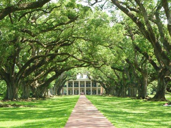Oak Alley Plantation: Avenue of Oaks, Beautiful!