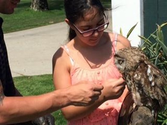 Omni La Costa Resort & Spa : Jason letting my youngest daughter pet Gadget the Owl