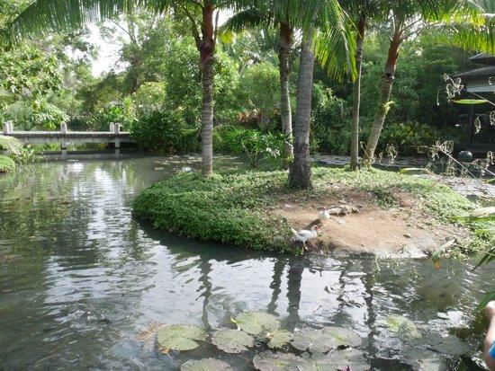 Anantara Mai Khao Phuket Villas : Lagoon area