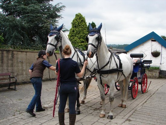 Red House Stables and Carriage Museum: Getting the horses into harness