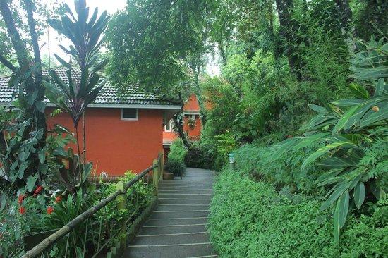 Tea Valley Resort: pathway