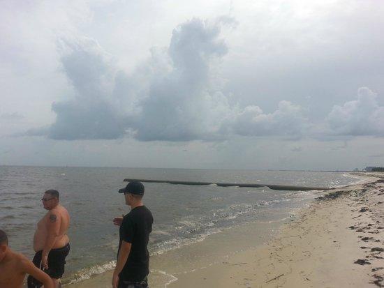 Biloxi Beach : More seaweed