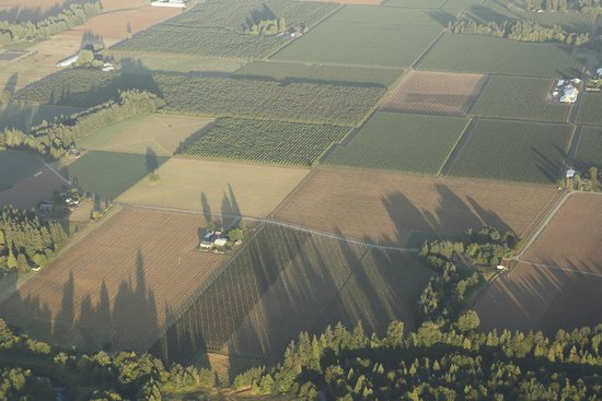 Portland Rose Hot Air Balloons: View from above